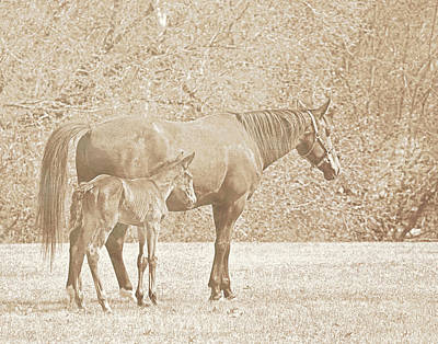 Photograph - Mare And Foal by Davandra Cribbie
