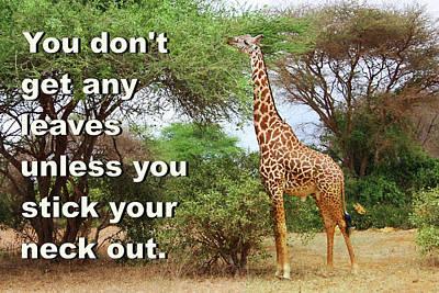 Photograph - Masai Giraffe by Ellen Henneke