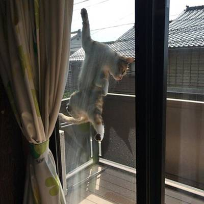 Photograph - スパイダーにゃん2 by Masamichi Takano