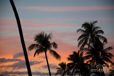 Photograph - Maui Palm Sunset by Kelly Wade
