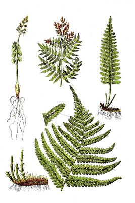 Wild Weather - Medicinal plants by Bildagentur-online