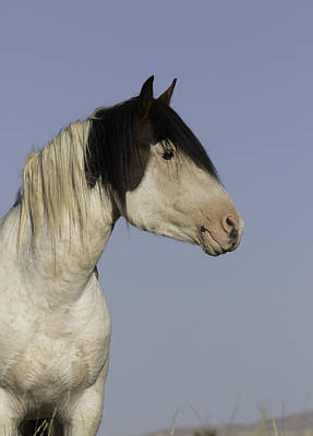 Photograph - Medicine Hat Stallion by Elizabeth Eldridge