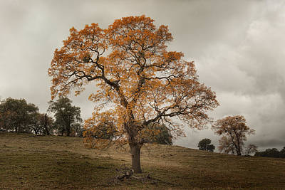 Fall Colors Photograph - Mesa Grande Tree by Joseph Smith