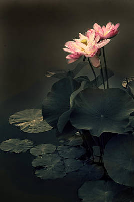 Photograph - Midnight Lotus by Jessica Jenney