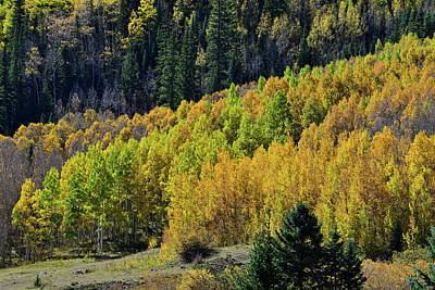 Photograph - Million Dollar Highway Aspens by Ray Mathis