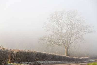 Photograph - Misty Morning by Clare Bambers