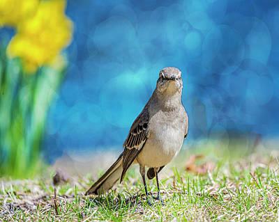 Photograph - Mockingbird by Cathy Kovarik