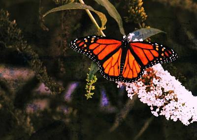 Photograph - Monarch by JAMART Photography