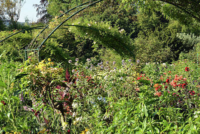 Photograph - Monet's Garden At Giverny by Harvey Barrison
