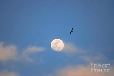Photograph - 2- Moon Bird by Joseph Keane