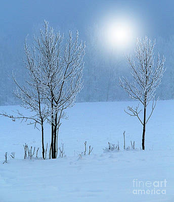 Photograph - Morning Frost by Roland Stanke