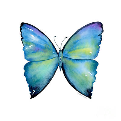 2 Morpho Aega Butterfly Original by Amy Kirkpatrick