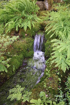 Easter Egg Stories For Children - Mossy Waterfall by Carol Groenen