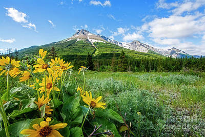 Photograph - Mountain Flowers by David Arment
