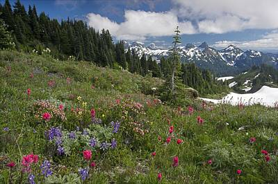 Mountain Meadow Art Print by Bob Gibbons