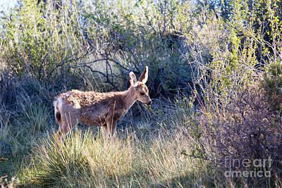 Mule Deer Herd Photograph - Mule Deer In Garden Of The Gods by Steve Krull