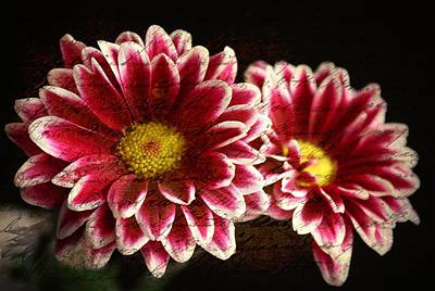 Purple Flowers Digital Art - Mums by Cathie Tyler