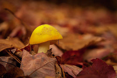 Photograph - Mushroom by Benjamin Dahl