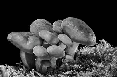 Photograph - Mushrooms by Andreas Dobeli