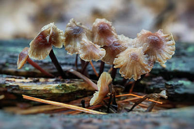 Photograph - Mushrooms by Lilia D