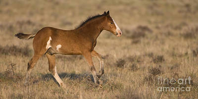 Mustang Foal Art Print by Jean-Louis Klein & Marie-Luce Hubert