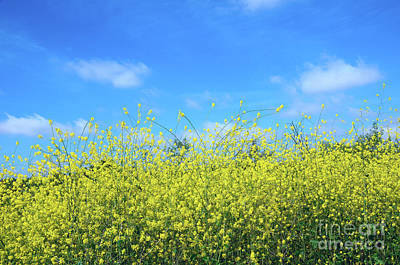 Mustard Beauty Art Print by Timothy OLeary