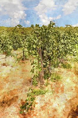 Napa Vineyard In The Spring Art Print by Brandon Bourdages