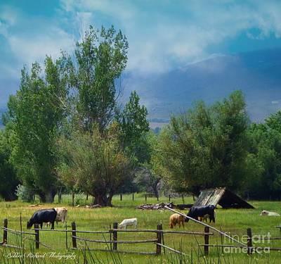 Photograph - Nevada  by Bobbee Rickard
