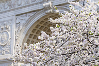Washington Square Park Photograph - New York City, New York, Close Up Of Blooming Trees In Washington Square Park by Tetra Images