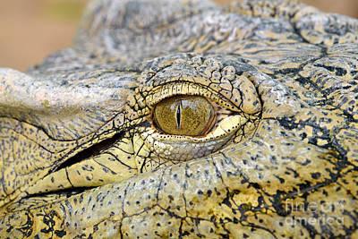 Alligator Photograph - Nile Crocodile by George Atsametakis