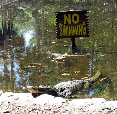 Photograph - No Swimming by Julia Stubbe