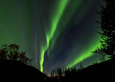 Photograph - Northern Lights, Aurora Borealis At Kantishna Lodge In Denali National Park by Brenda Jacobs