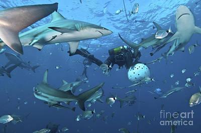 Frenzy Photograph - Oceanic Blacktip Sharks Waiting by Mathieu Meur