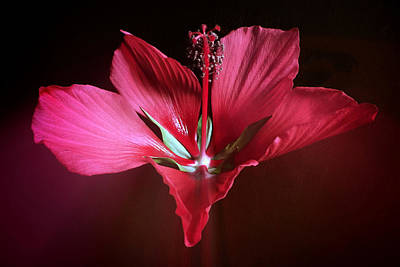 Florida Florals Photograph - 2 Of 3 Triptych - Mallow by Kathryn  Stivers