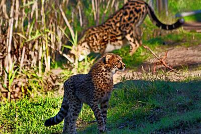 Photograph - On The Prowl by Miroslava Jurcik