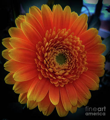 Photograph - Orange by Joseph Yarbrough