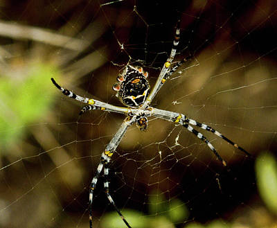 Orb Spider Original by Arthur Bohlmann