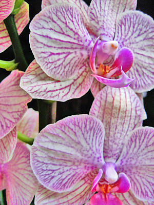 Orchid. Tenerife. Canary Islands. Original by Andy Za