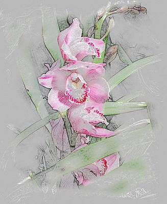 Painting - Orchidaceae by Don Wright