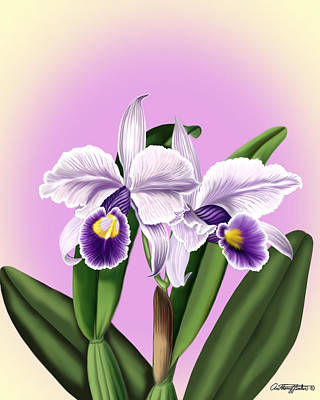 Mixed Media - Orchids by Anthony Seeker