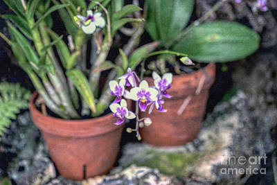 Photograph - Orchids by Cathy Donohoue
