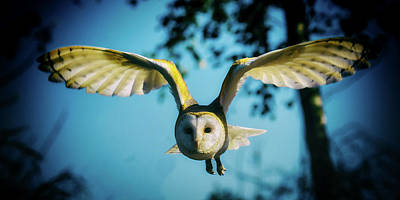 Owl In Flight Art Print by Danny Moore