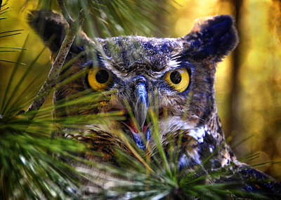 Owl In The Pines Art Print