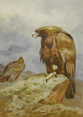 Painting - Pair Of Golden Eagles by Archibald Thorburn