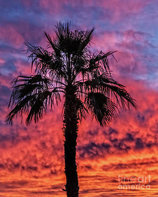 Photograph - Palm Tree Silhouette by Robert Bales