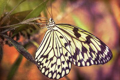 Photograph - Paper Kite Butterfly  by Saija Lehtonen