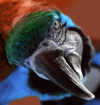 Photograph - Parrot by Artistic Panda