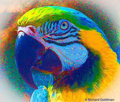 Photograph - Parrot by Richard Goldman