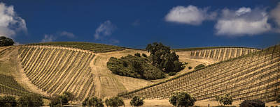 Paso Robles Winery Art Print by Michael Just