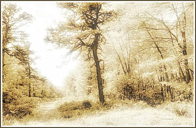 Photograph - Path In A Pennsylvania Forest In Autumn by A Gurmankin